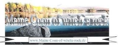 Maine Coon of witch`s rock
